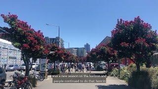 Download Pōhutukawa: The New Zealand Christmas tree Video