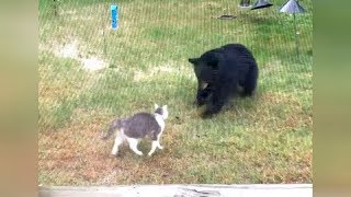 Download Are you ready for ULTRA FUNNY WILD ANIMALS? - Try not to DIE FROM LAUGHING! Video