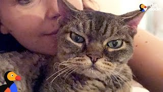 Download Aggressive Cat Shocks Mom By Becoming A Snugglebug - BARBARA | The Dodo Video
