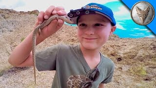 Download Exploring for Desert Animals! Video