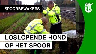 Download Dode hond legt treinverkeer plat - SPOORBEWAKERS #02 Video