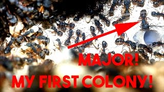 Download MY FIRST COLONY! - Camponotus Rufipes Video
