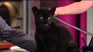Download Jack Hanna On David Letterman Show 9 May, 2013 Video