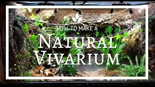 Download How to build a Natural Vivarium (From Scratch)! Video