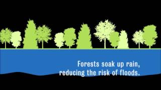 Download Loss of Biodiversity Video