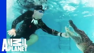 Download Unwelcome Gator Takes a Dip in Family Pool   Gator Boys Video
