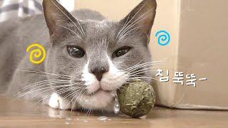 Download 고양이 마약에 취해 침 뚝뚝 흘리는 광경!! (불금캣닢파티) Video