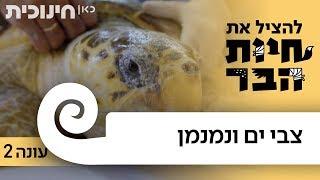 Download להציל את חיות הבר עונה 2 | צבי ים ונמנמן 🐢 Video