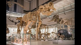 Download Museum of Zoology reopens thanks to mammoth volunteer effort! Video