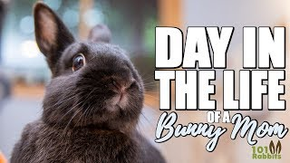 Download DAY IN THE LIFE OF A BUNNY MOM Video