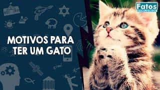 Download 10 Motivos para ter um gato Video