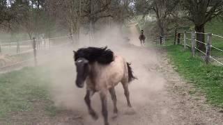 Download Pferdehof Birkenweiler, unsere Pferde, Ponys und Esel kommen von der der Weide Video