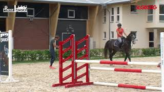 Download Training des jungen Springpferdes mit Christian Kukuk Video