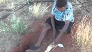 Download Aboriginal Bush Tucker Hunting with Margaret and Dorothy Napangardi Video