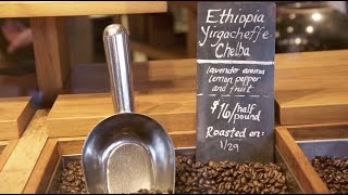 Download Coffee 101 | Different types of coffee beans: Flavors of different types coffee beans Video