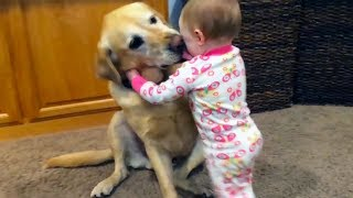Download Adorable Babies Playing With Dogs and Cats - Funny Babies Compilation 2018 Video