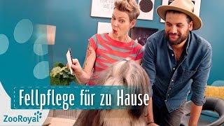 Download Fellpflege - Deinen Hund richtig bürsten mit Franziska Knabenreich | Rund um den Hund | ZooRoyal Video