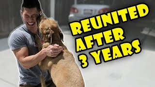 Download DOG REUNITED AFTER 3 YRS APART   Meets New Puppy - Life After College: Ep. 490 Video