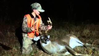 Download Deer Comes Back to Life Video