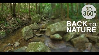 Download Back to Nature 2 - Rainforest (Stereoscopic 360° VR Video) Video