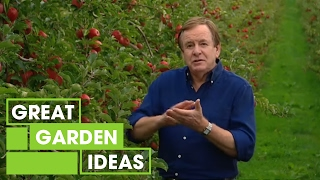 Download Better Homes and Gardens - How to grow an apple tree Video