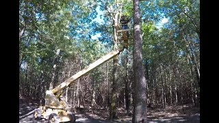 Download Cutting down a tree using a boom lift Video