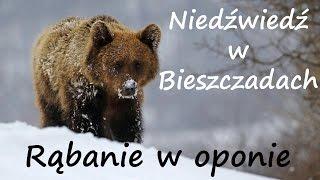 Download Z życia Bieszczadników - oko w oko z niedźwiedziem i rąbanie drewna w oponie Video