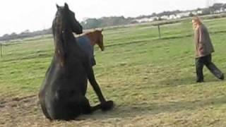 Download Les chevaux en pleine action Video