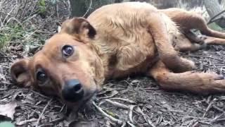 Download Corto de maltrato animal (Lucky Lucy) Video
