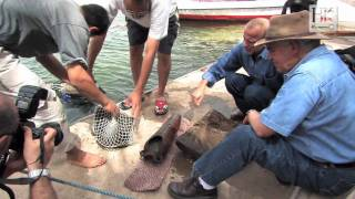 Download Underwater Archaeology: Excavating the Nile with Dr Hawass Video