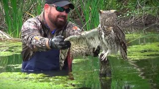 Download When A Man Went To Help An Owl Trapped In Fishing Line, The Raptor's Reaction Came Out Of The Blue Video