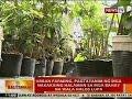 Download BT: Urban farming, pagtatanim ng mga nakakaing halaman sa mga bahay na wala halos lupa Video