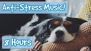 Download Have the Most Relaxed Dog! Relaxing Music for Easily Stressed Dogs, Nervous Dogs. Help Dogs Sleep! Video