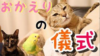 Download 彼女の帰りをみんなでお出迎え【猫】【インコ】 Video