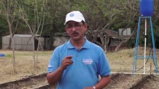 Download VAMOS ADELANTE SISTEMA DE RIEGO POR GOTEO HD Video