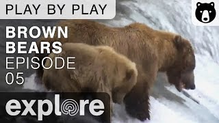 Download Brown Bear Play By Play - Ranger Mike Fitz - Katmai National Park - Episode 05 Video