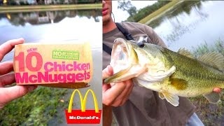 Download HAND-FEEDING GIANT BASS MCNUGGETS?!?!? Video