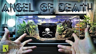 Download ANGEL OF DEATH: Why I Sent a Creature to Kill My Ants Video