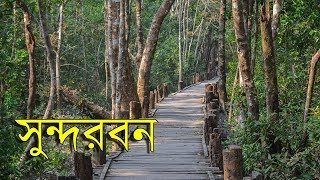 Download Travel Sundarban | World's Largest Mangrove Forest! Video