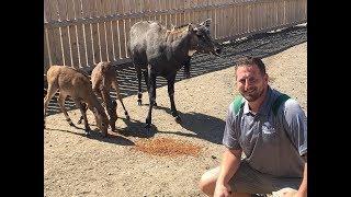 Download Animal Adventures with Jordan: Nilgai Video