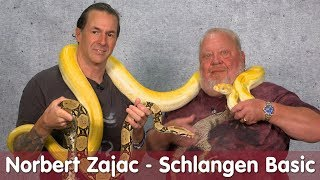 Download Norberts Zajac zu Besuch | Schlangen Basic bei M&S Reptilien Video