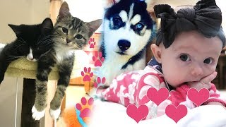 Download Kittens, Puppies and Cute Baby Video