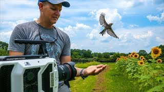 Download Bird Taking Off at 20,000 fps (213 milliseconds) - Smarter Every Day 197 Video