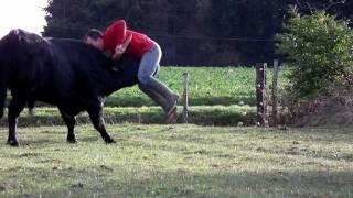 Download Un taureau de corrida encorne un homme . . . . ? Mais non il joue avec lui. Video