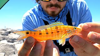Download EASY Way to Catch Saltwater Fish!! Video