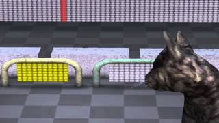 Download Quantum Mechanics: Animation explaining quantum physics Video