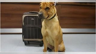 Download Dog Abandoned At Train Station Tied To A Luggage Bag Full Of His Favorite Belongings Video
