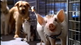 Download Babe - Pig in the City (1998) Teaser (VHS Capture) Video