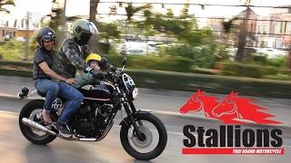 Download Stallions Buccaneer Video