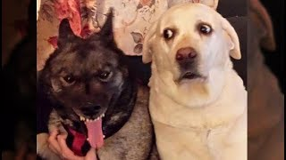 Download Awesome Funny Animals' Life Videos - Funniest Pets 😇 Video